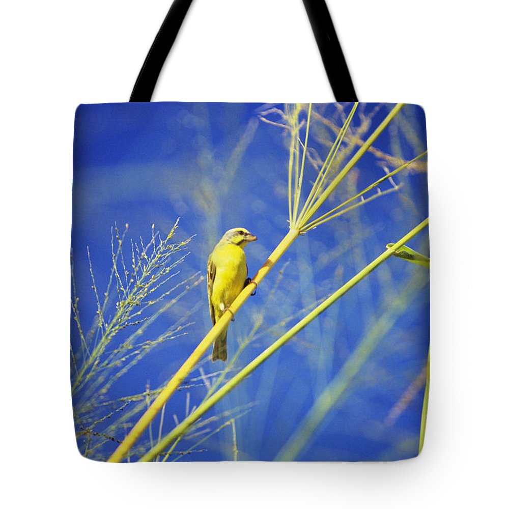 Animal Art Tote Bag featuring the photograph Yellow Fronted Canary by Bob Abraham - Printscapes