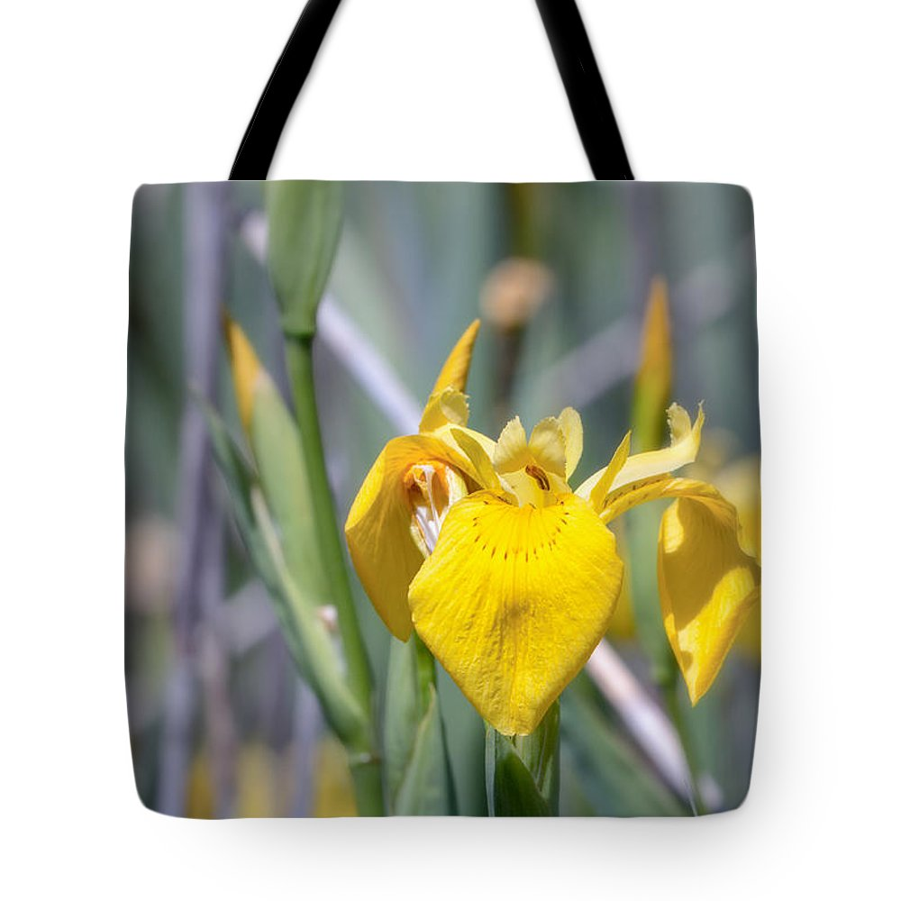 Asparagales Tote Bag featuring the photograph Yellow Iris Wild Flower by Jivko Nakev