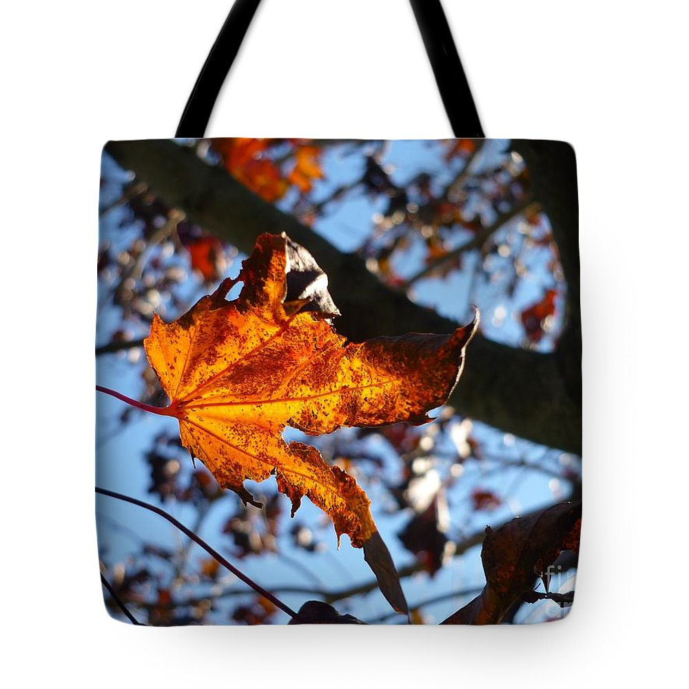 Autumn Tote Bag featuring the photograph Yellow Leaf 1 by Jeff Breiman