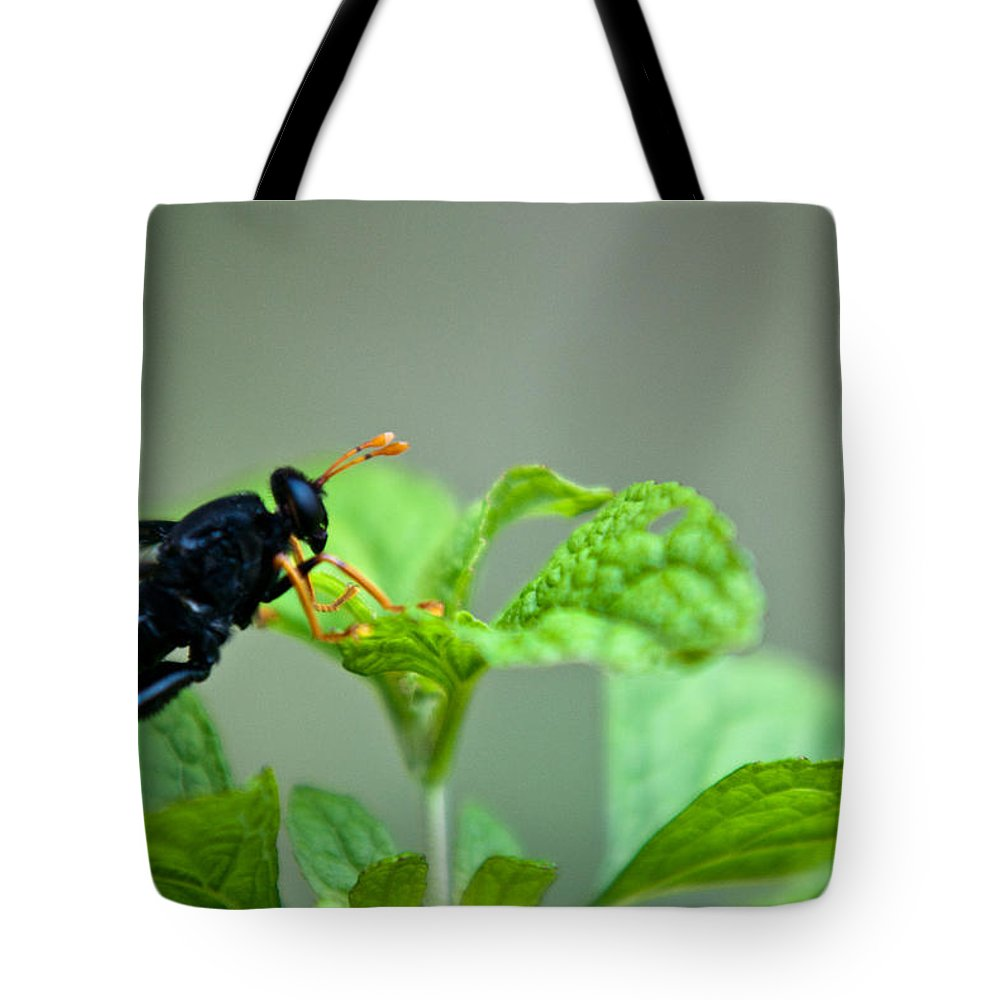 Wasp Tote Bag featuring the photograph Yellow Leggings by Douglas Barnett