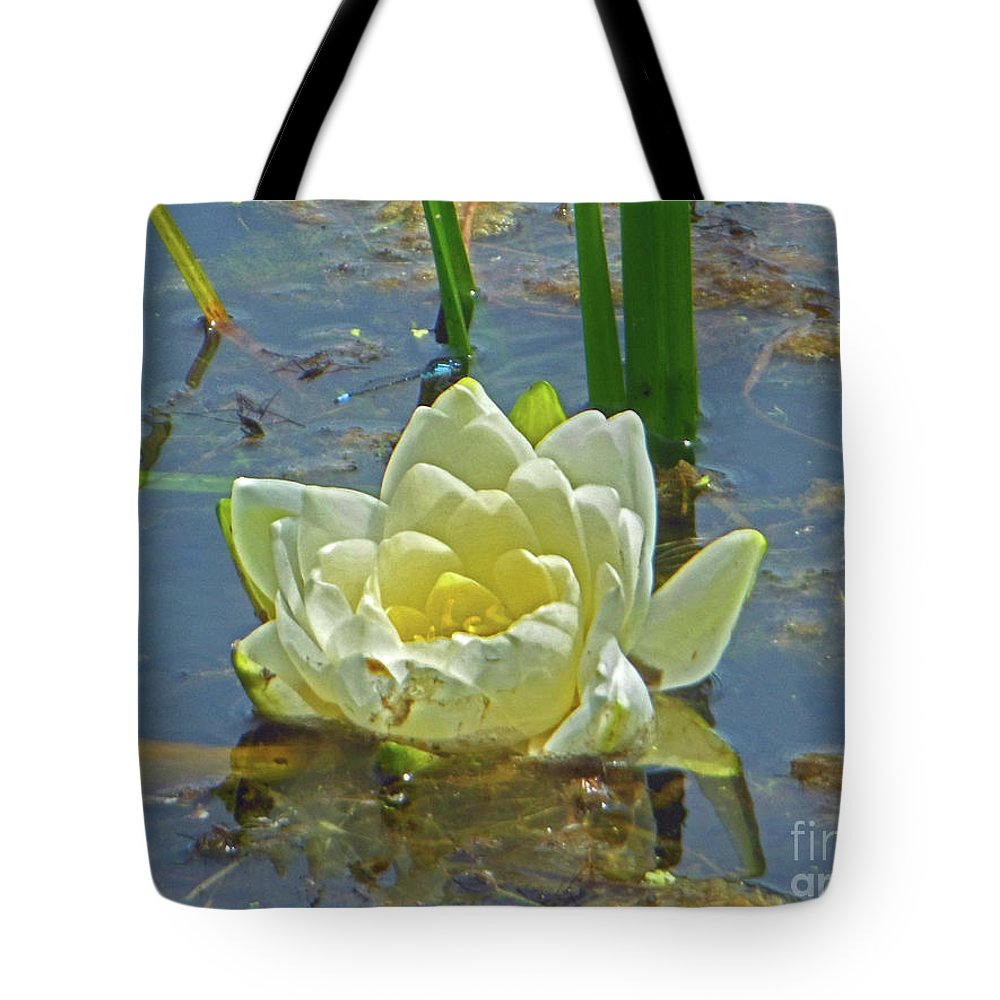 Yellow Nymphaea Alba Tote Bag featuring the photograph Yellow Nymphaea Alba Damselfy by Rockin Docks Deluxephotos