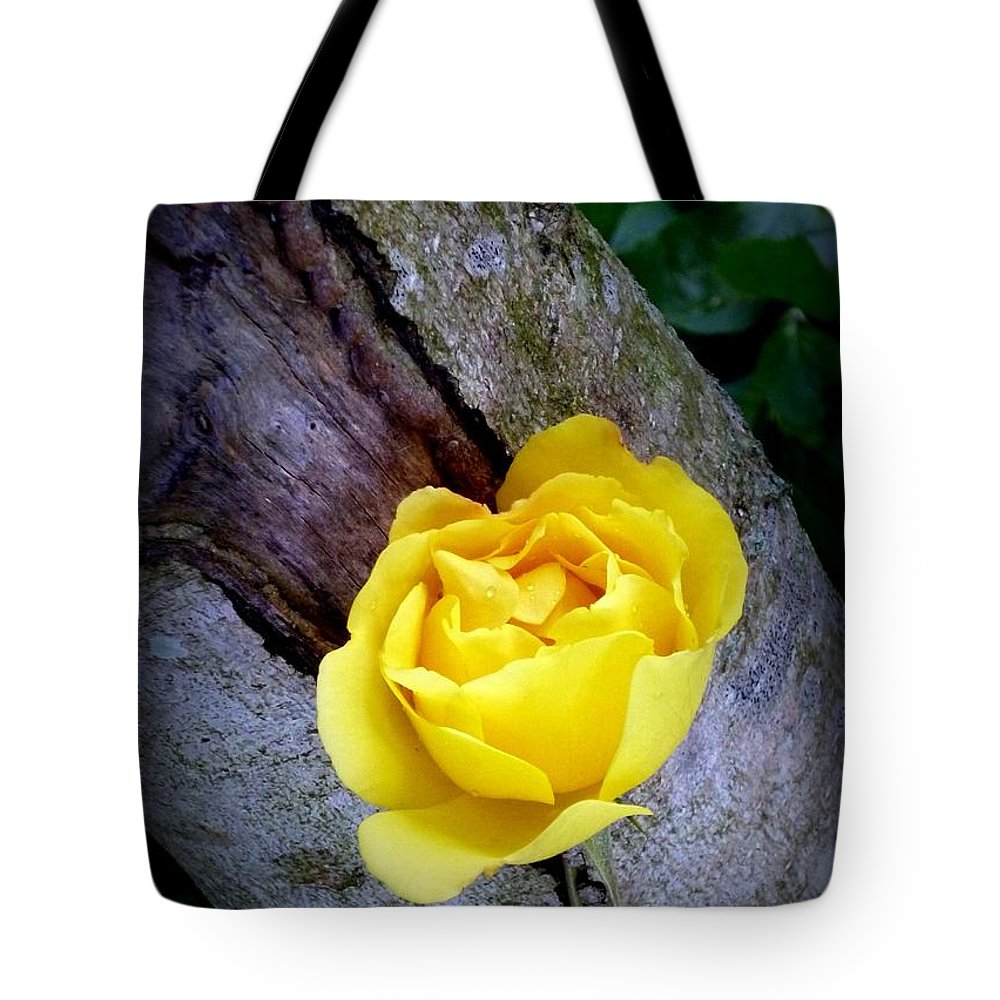 Rose Tote Bag featuring the photograph Yellow Rose by Dianne Pettingell