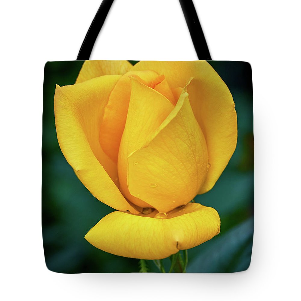 Color Tote Bag featuring the photograph Yellow Rose by Stanton Tubb