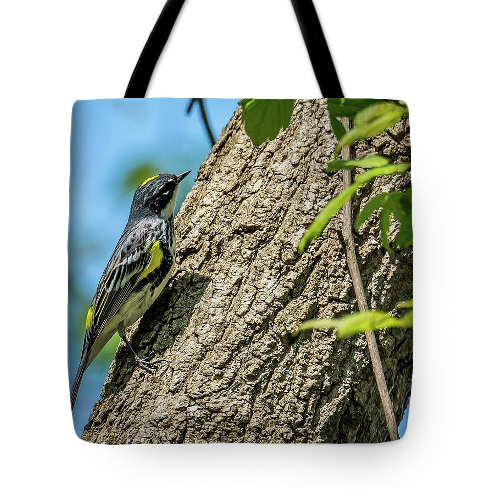 Nature Tote Bag featuring the photograph Yellow-rumped Warbler by Michael Cunningham