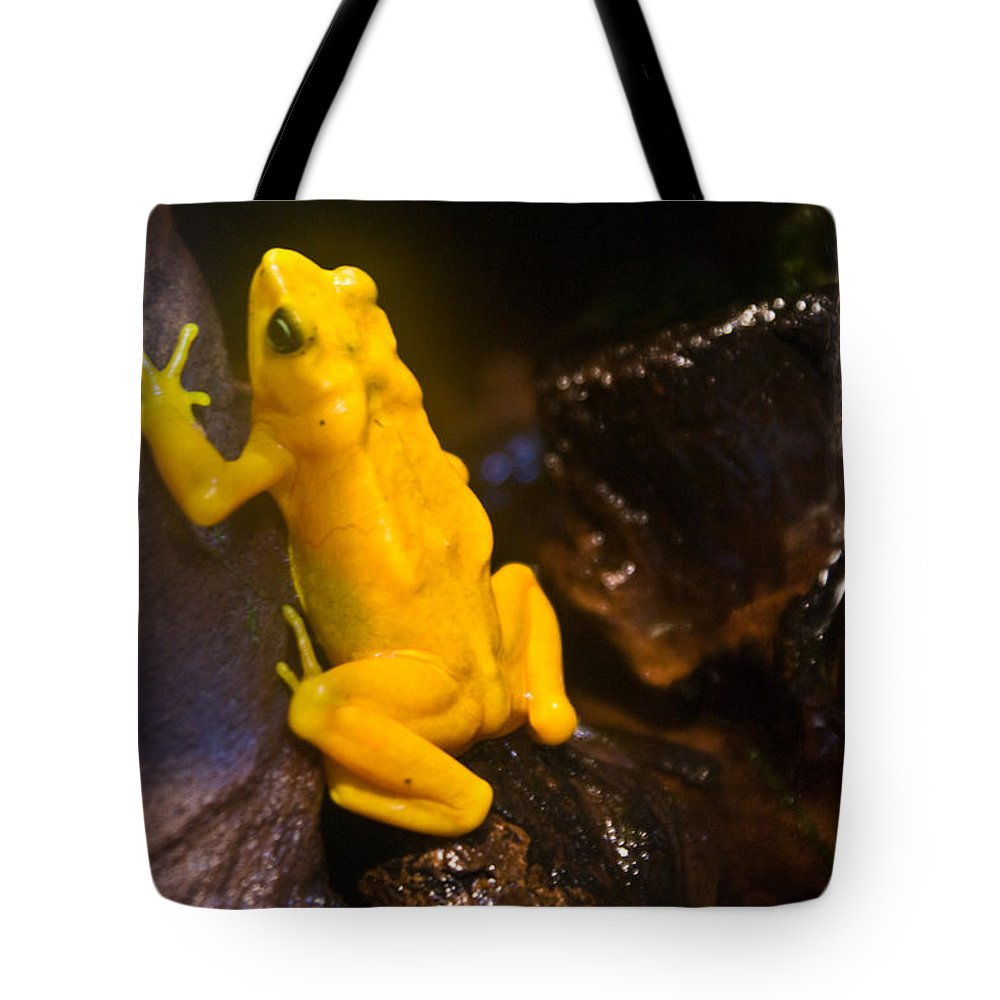 Frog Tote Bag featuring the photograph Yellow Tropical Frog by Douglas Barnett