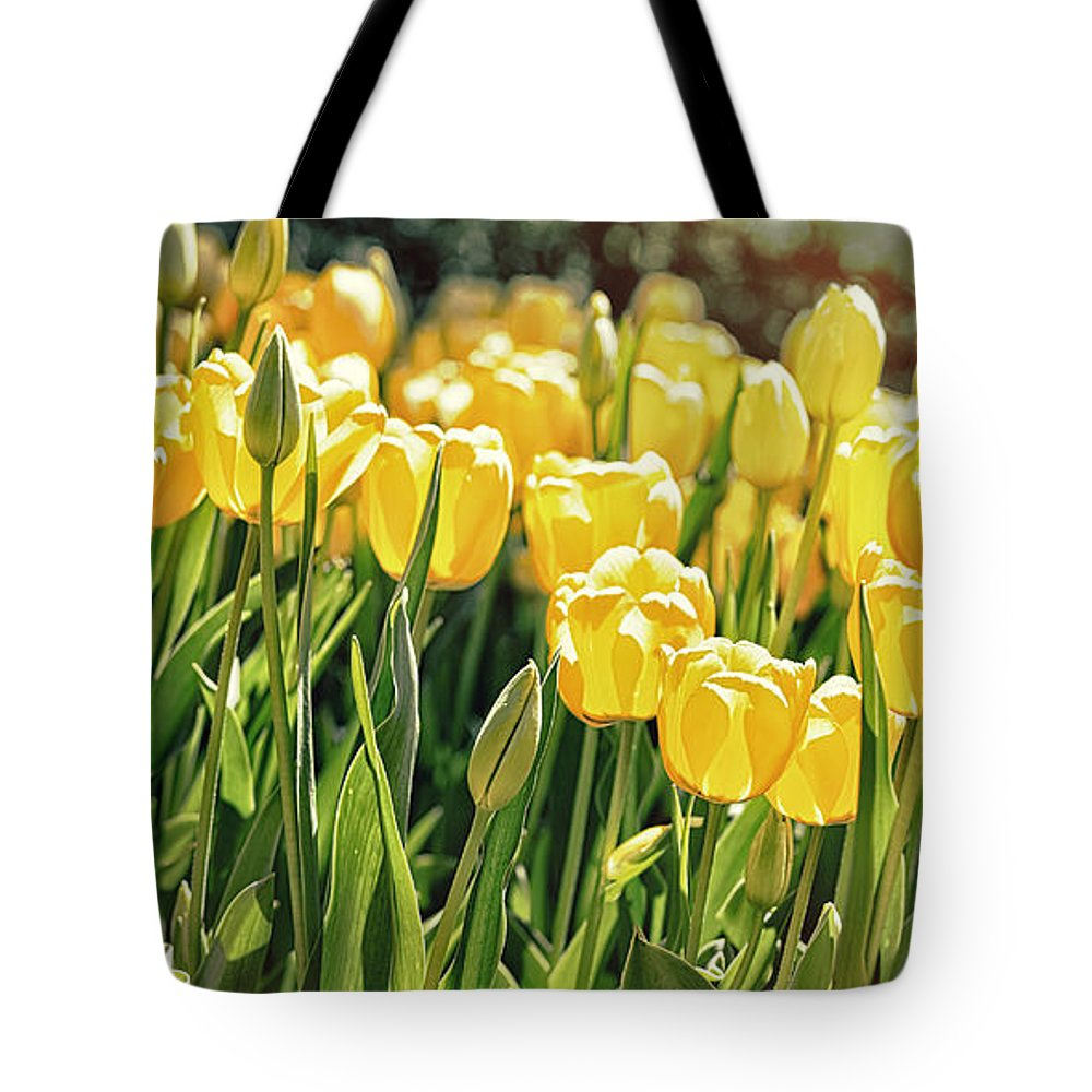 Nature Tote Bag featuring the photograph Yellow Tulip Panoramic by Tom Gari Gallery-Three-Photography