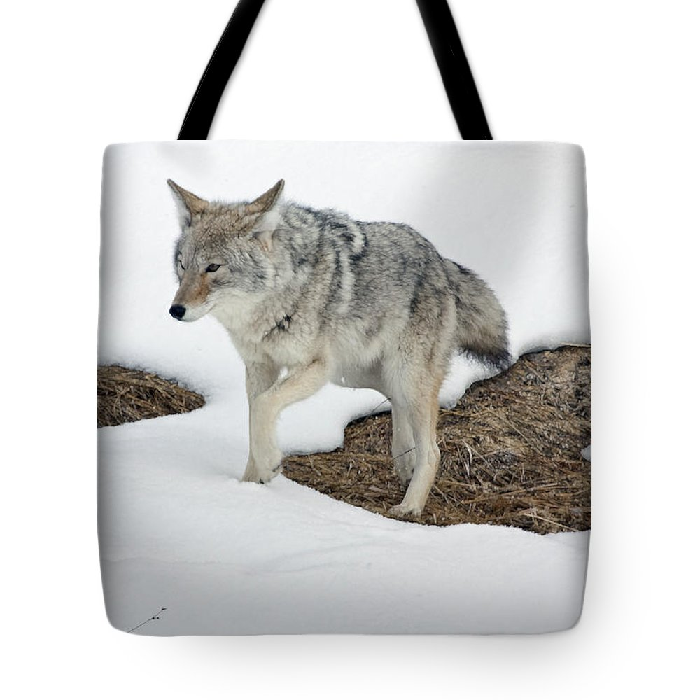 Coyote Tote Bag featuring the photograph Yellowstone Coyote by Mary Haber