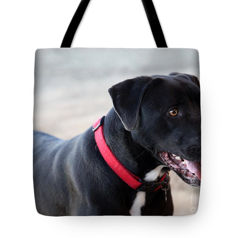 Dogs Tote Bag featuring the photograph Yes I Want To Play by Amanda Barcon