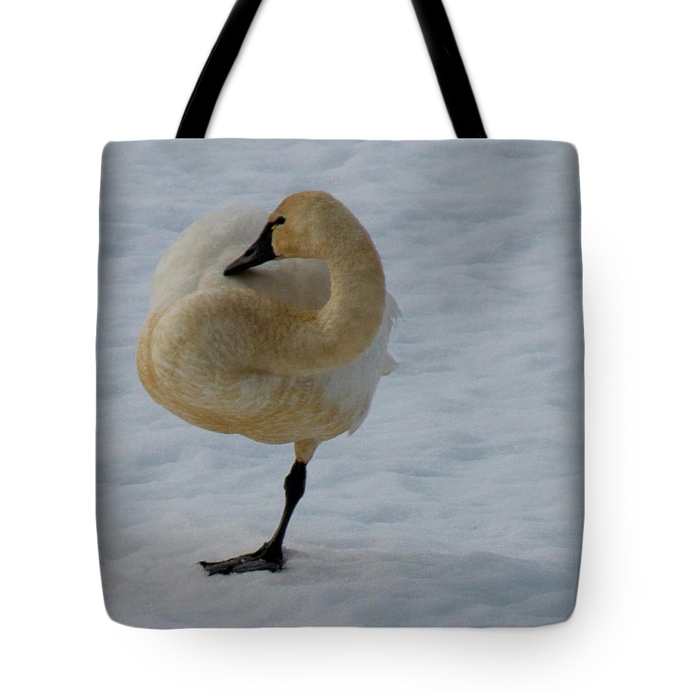 Swans Tote Bag featuring the photograph Yoga Tree Pose by Dan Earle