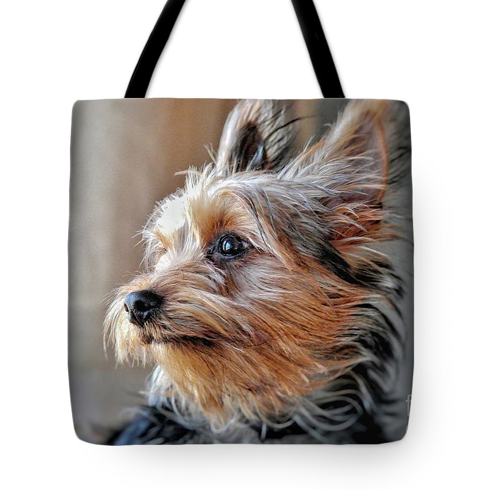 Yorkie Tote Bag featuring the photograph Yorkshire Terrier Dog Pose #2 by John Myers