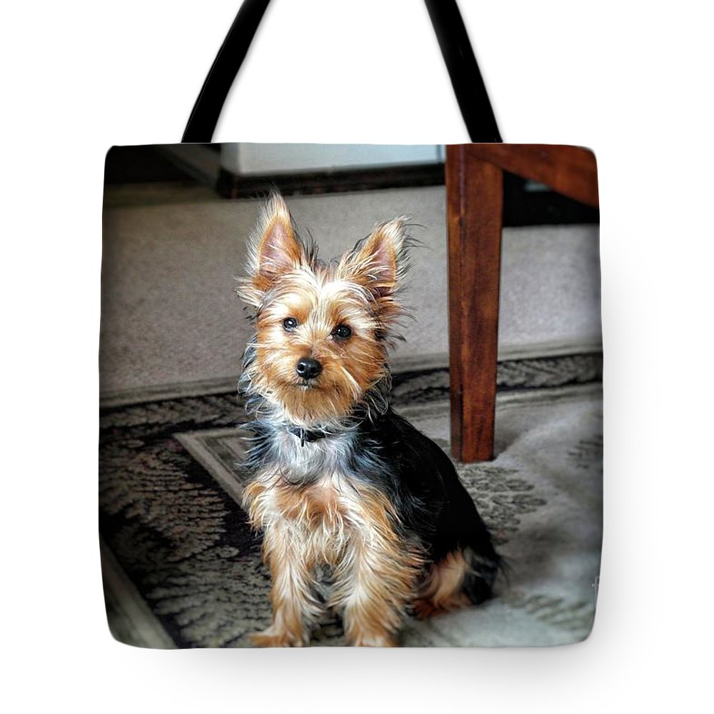 Yorkie Tote Bag featuring the photograph Yorkshire Terrier Dog Pose #6 by John Myers