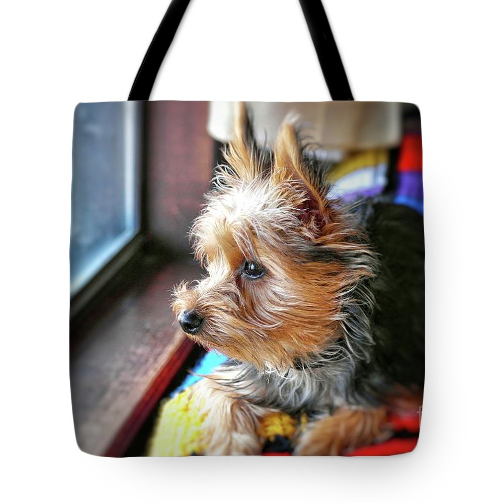 Yorkie Tote Bag featuring the photograph Yorkshire Terrier Dog Pose #8 by John Myers