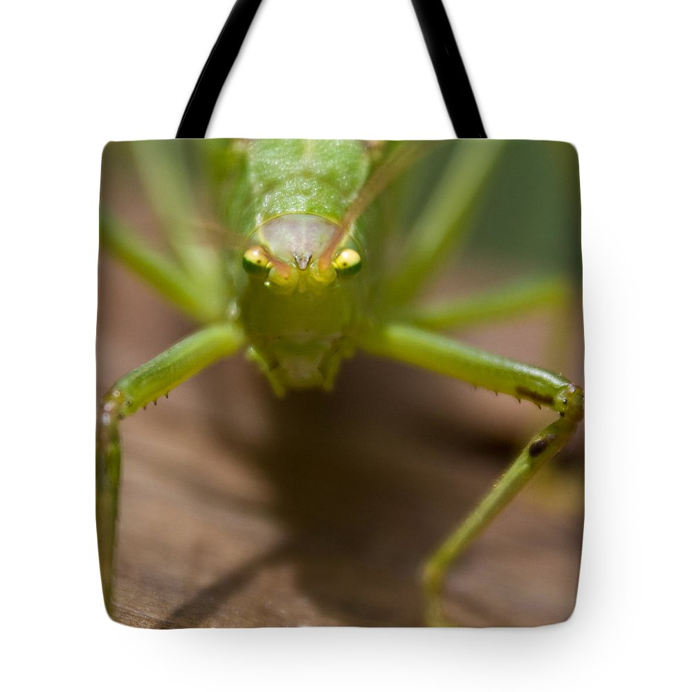 Katydid Tote Bag featuring the photograph You Said What by Douglas Barnett