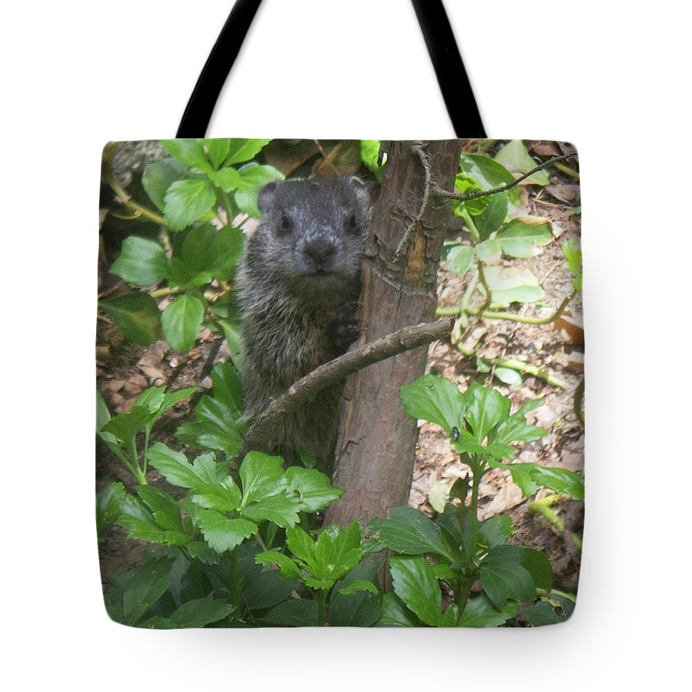 Woodchuck Tote Bag featuring the photograph You Talkin' To Me? by Geoff Jewett