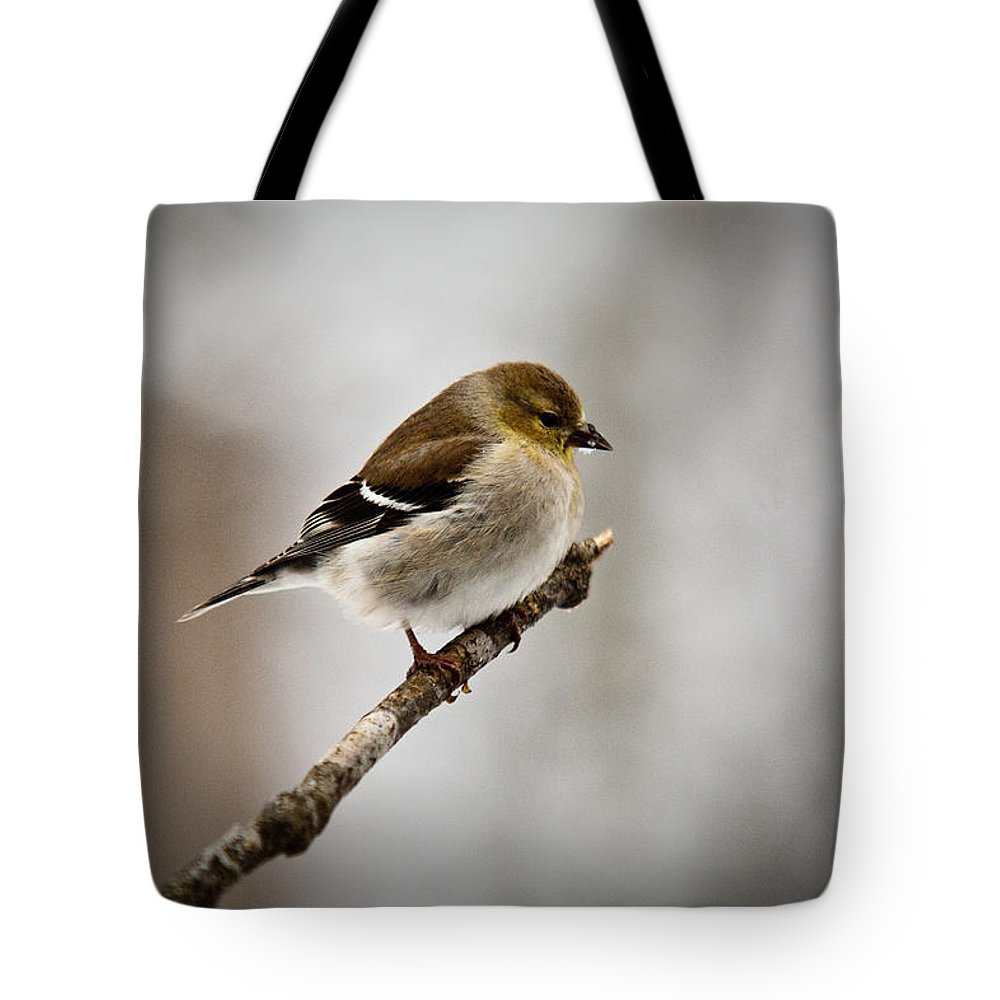 Cove Tote Bag featuring the photograph Young American Golden Finch 1 by Douglas Barnett