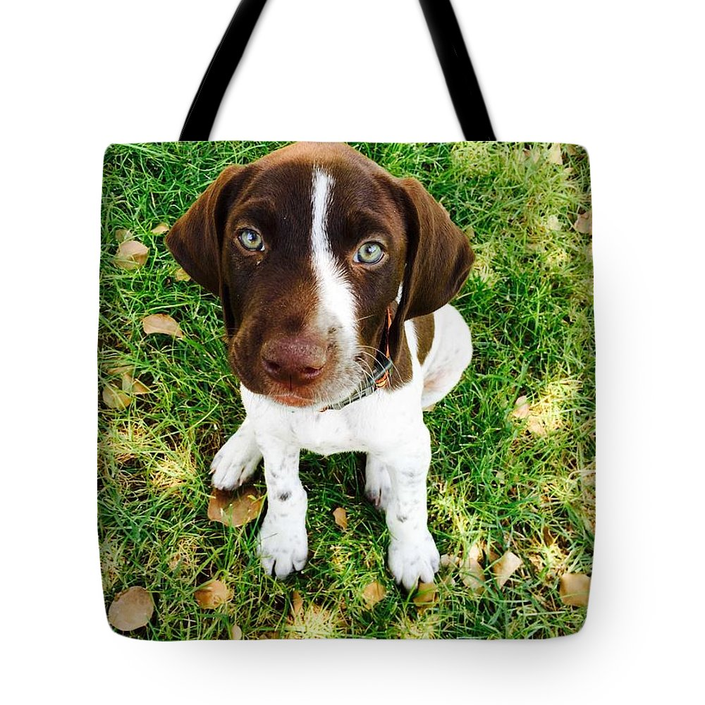 Pup Tote Bag featuring the photograph Young Blue Eyes by Donna Spadola