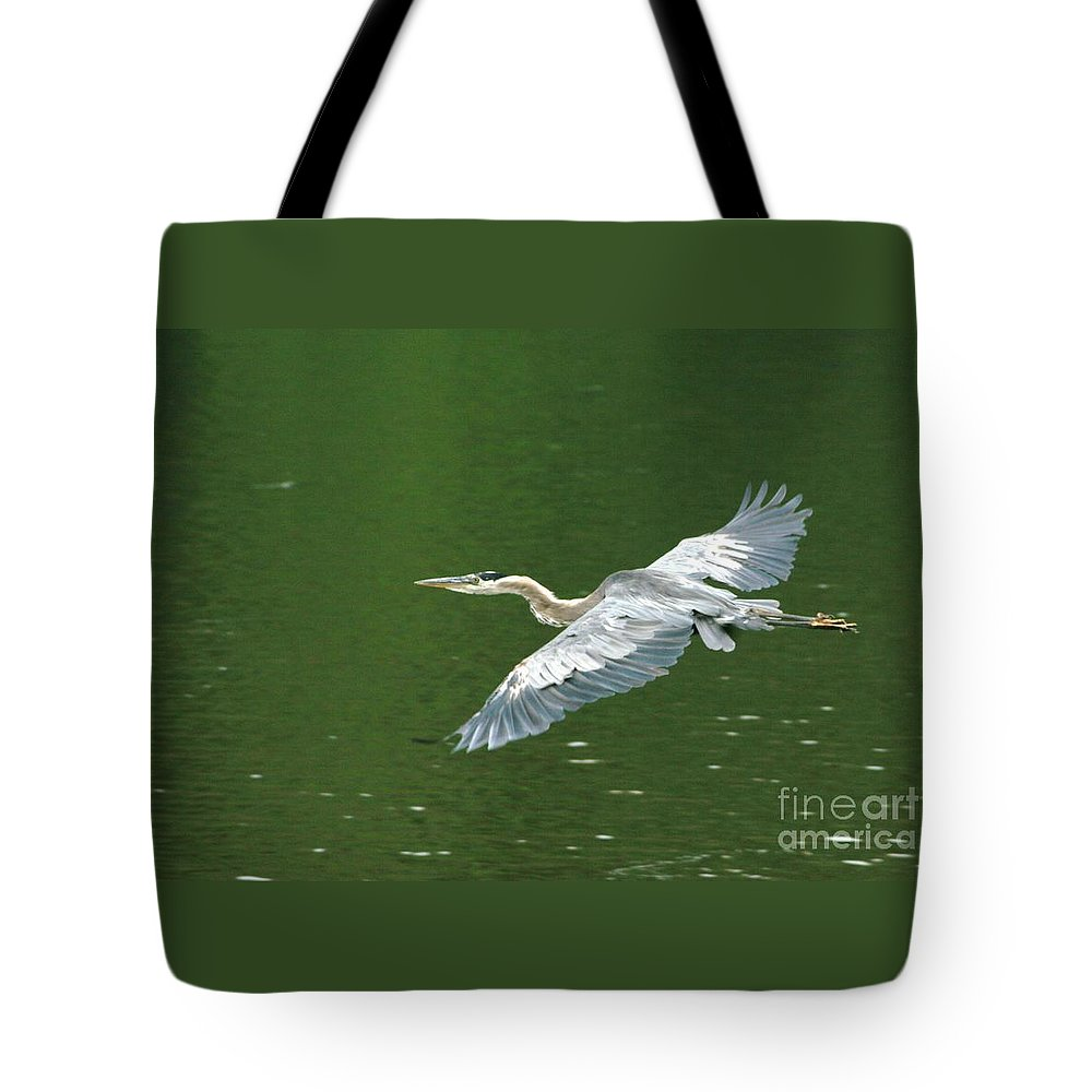 Landscape Nature Wildlife Bird Crane Heron Green Flight Ohio Water Tote Bag featuring the photograph Young Great Blue Heron Taking Flight by Dawn Downour
