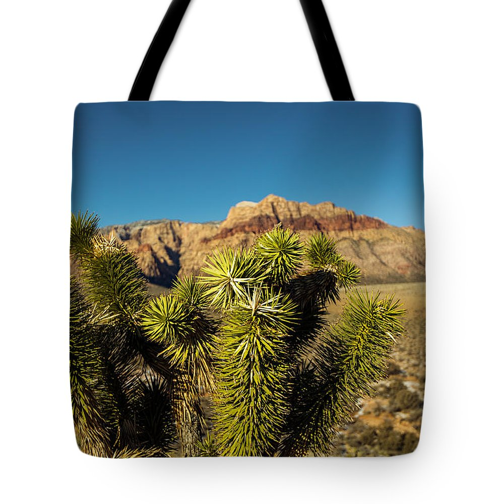 Desert Plant Tote Bag featuring the photograph Young Joshua by Rockland Filmworks