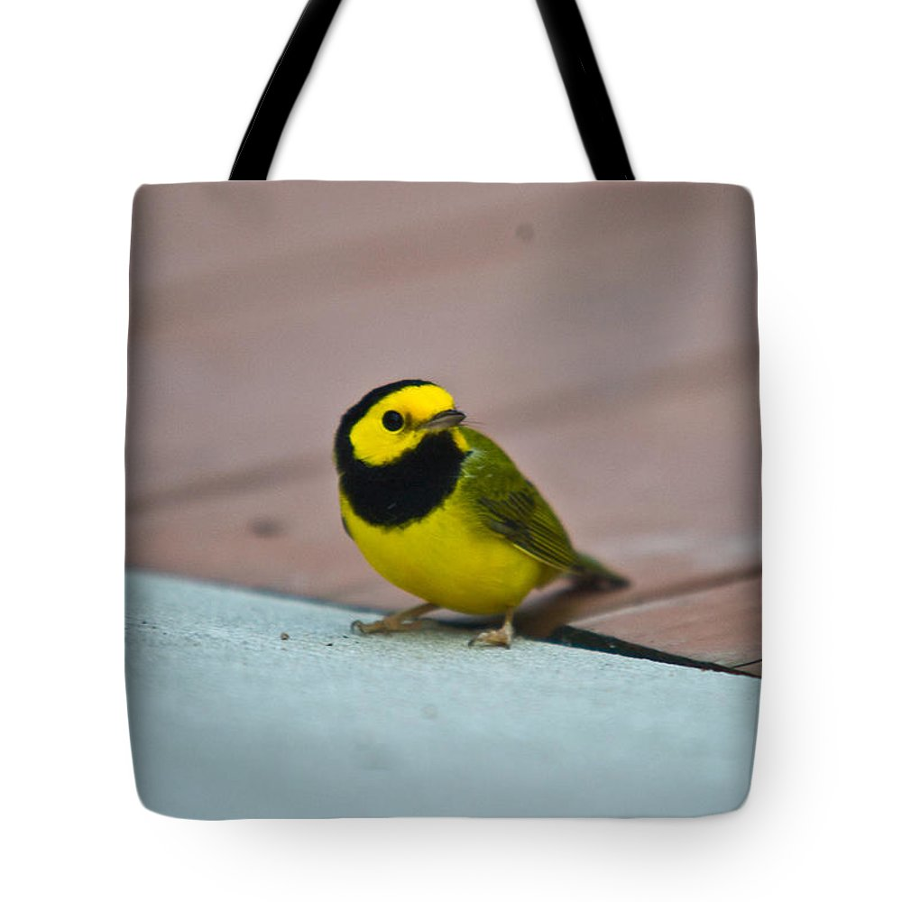 Cove Tote Bag featuring the photograph Young Male Hooded Warbler 2 by Douglas Barnett