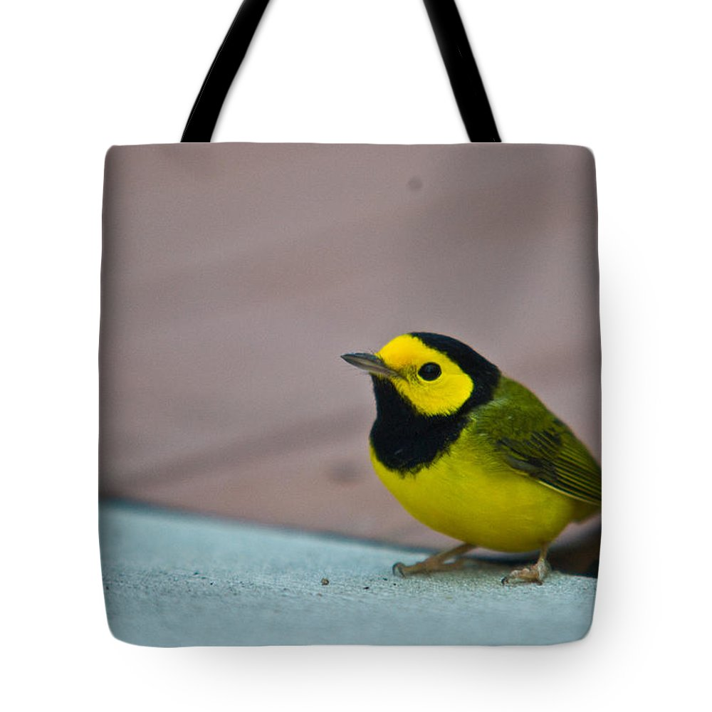 Cove Tote Bag featuring the photograph Young Male Hooded Warbler 3 by Douglas Barnett