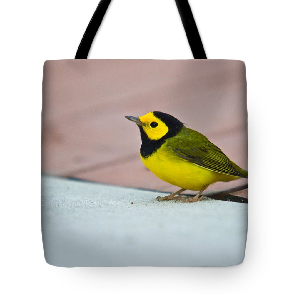 Cove Tote Bag featuring the photograph Young Male Hooded Warbler 4 by Douglas Barnett