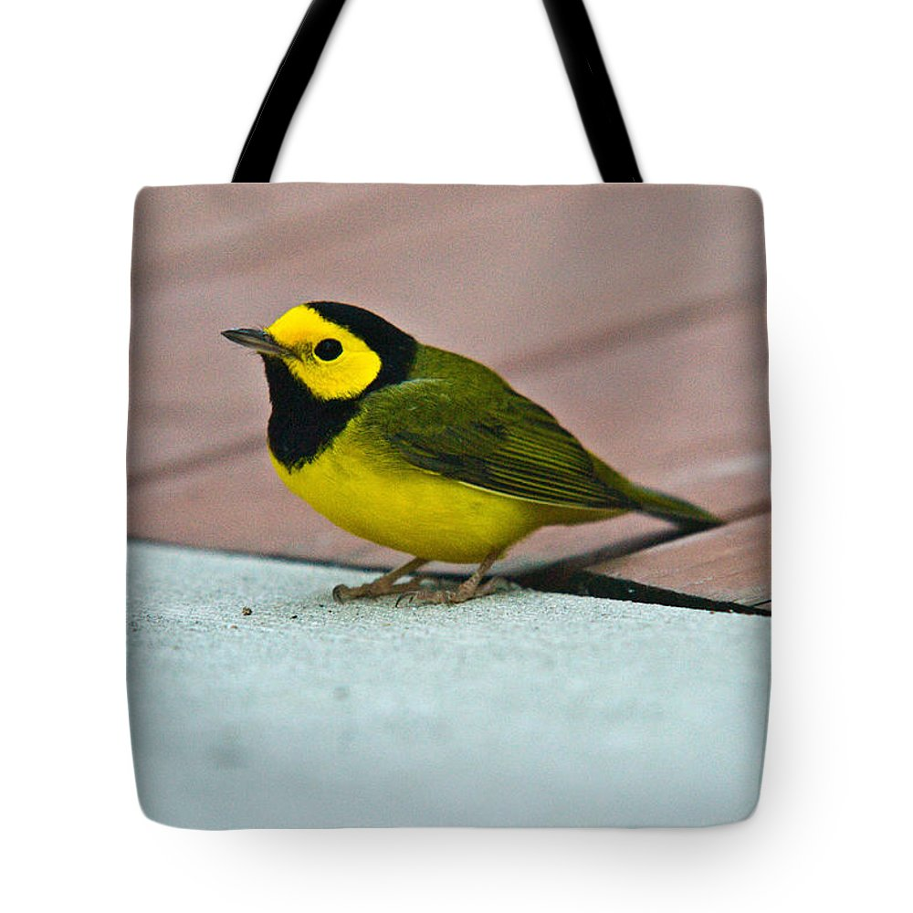 Cove Tote Bag featuring the photograph Young Male Hooded Warbler 5 by Douglas Barnett