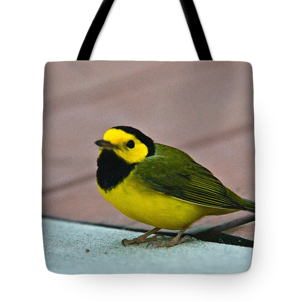 Cove Tote Bag featuring the photograph Young Male Hooded Warbler 6 by Douglas Barnett