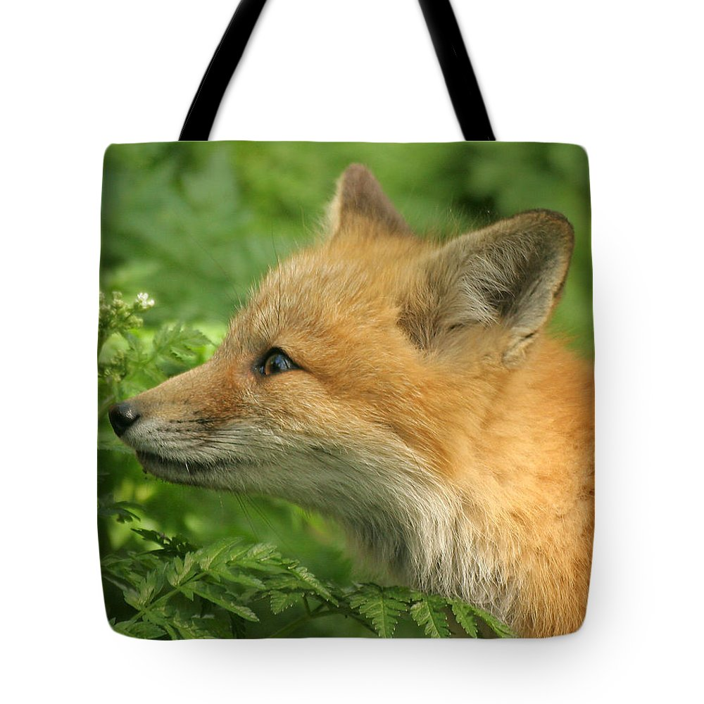 Red Fox Tote Bag featuring the photograph Young Red Fox In Profile by Doris Potter