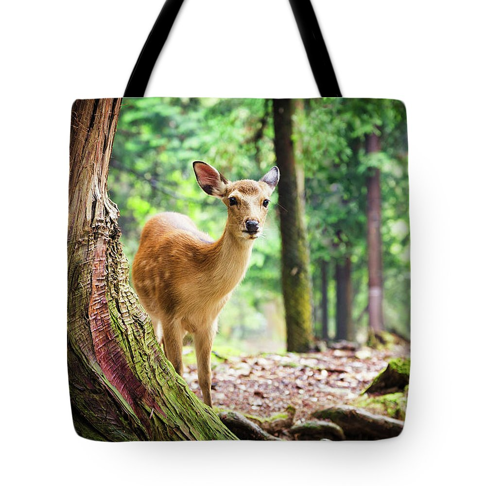 Nara Tote Bag featuring the photograph Young Sika Deer In Nara Park by Jane Rix