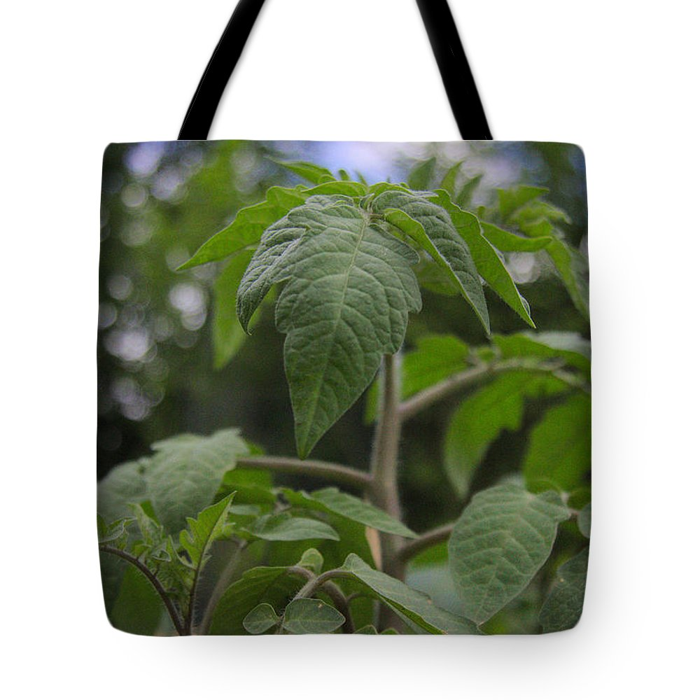Tomato Tote Bag featuring the photograph Young Tomato by Natalie Hood