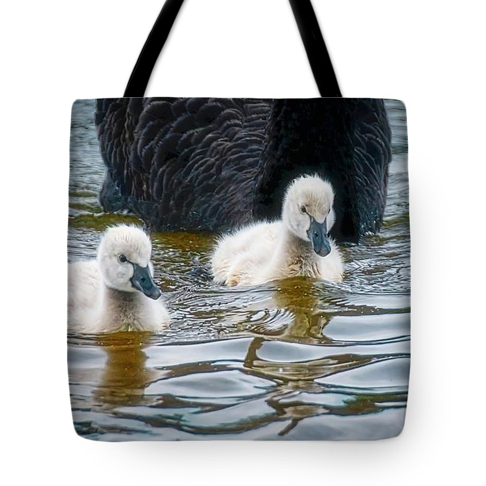 Black Swan Cygnets Tote Bag featuring the photograph Young 'uns, Black Swan Cygnets by Zayne Diamond Photographic