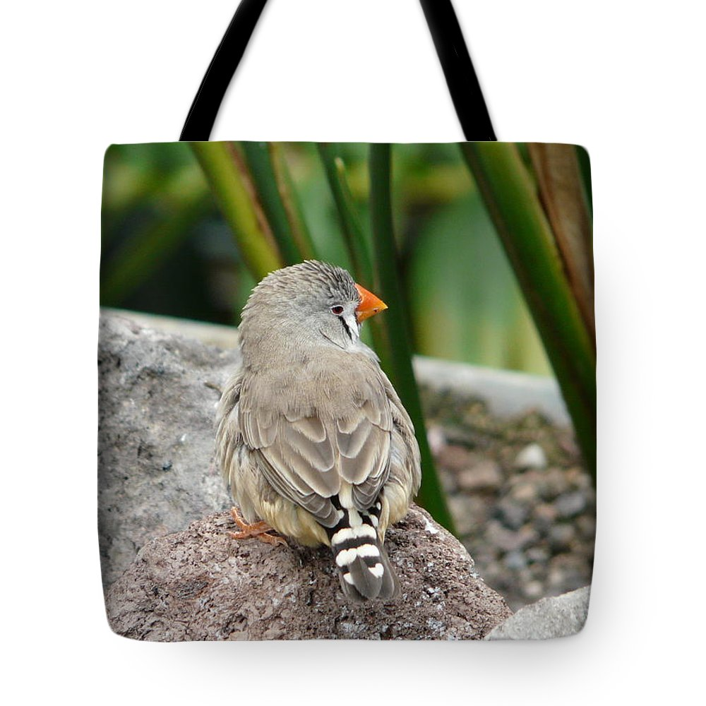 Bird Tote Bag featuring the photograph Zebra Finch by Valerie Ornstein