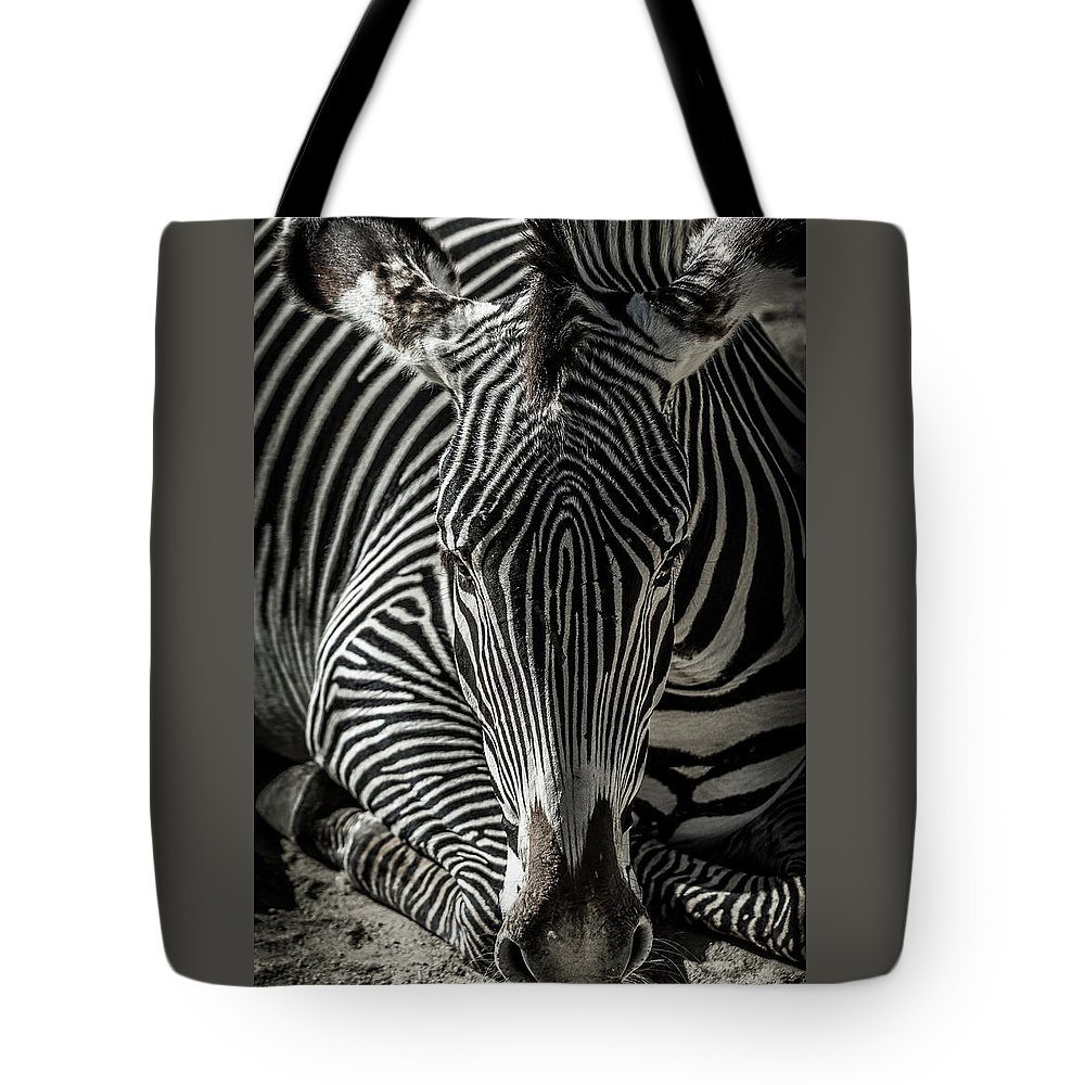 Zebra Tote Bag featuring the photograph Zebra by Martin Alonso