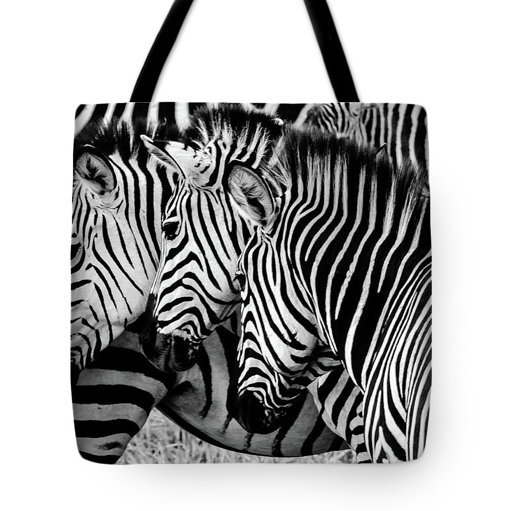 3scape Tote Bag featuring the photograph Zebras Triplets by John Piekos