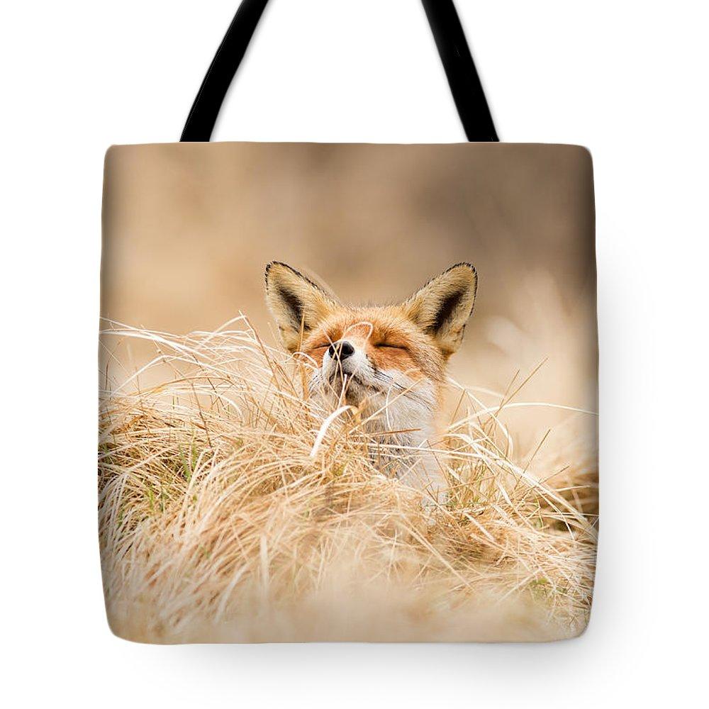 Fox Tote Bag featuring the photograph Zen Fox Series - Zen Fox 2.7 by Roeselien Raimond