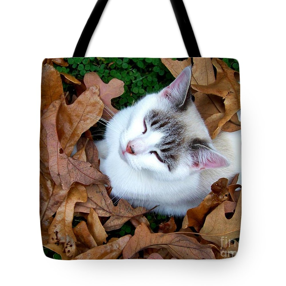 Cat Tote Bag featuring the photograph Zen Moment by Jai Johnson