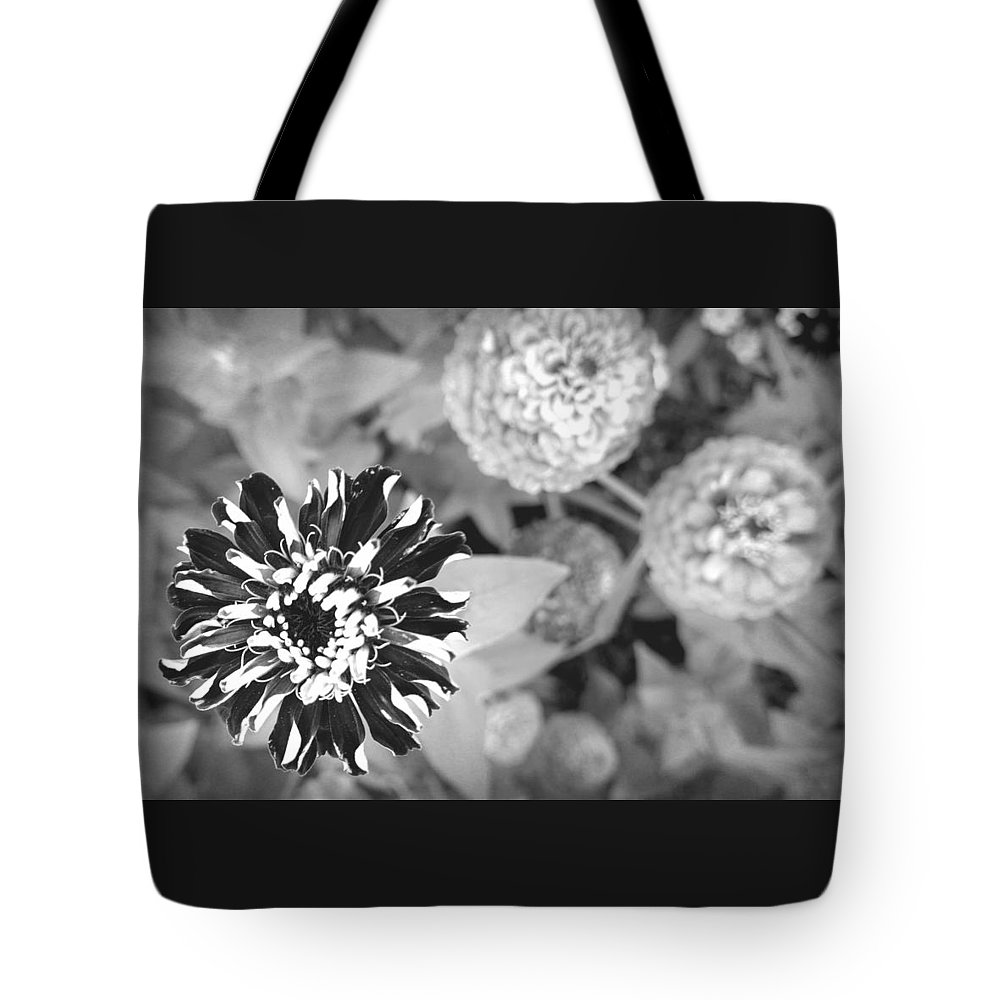Black And White Tote Bag featuring the photograph Zinnia In Black And White by Lois Braun