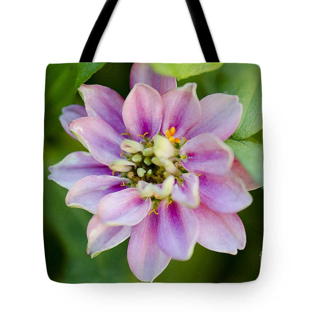 Floral Tote Bag featuring the photograph Zinnia In Pink by Betty LaRue