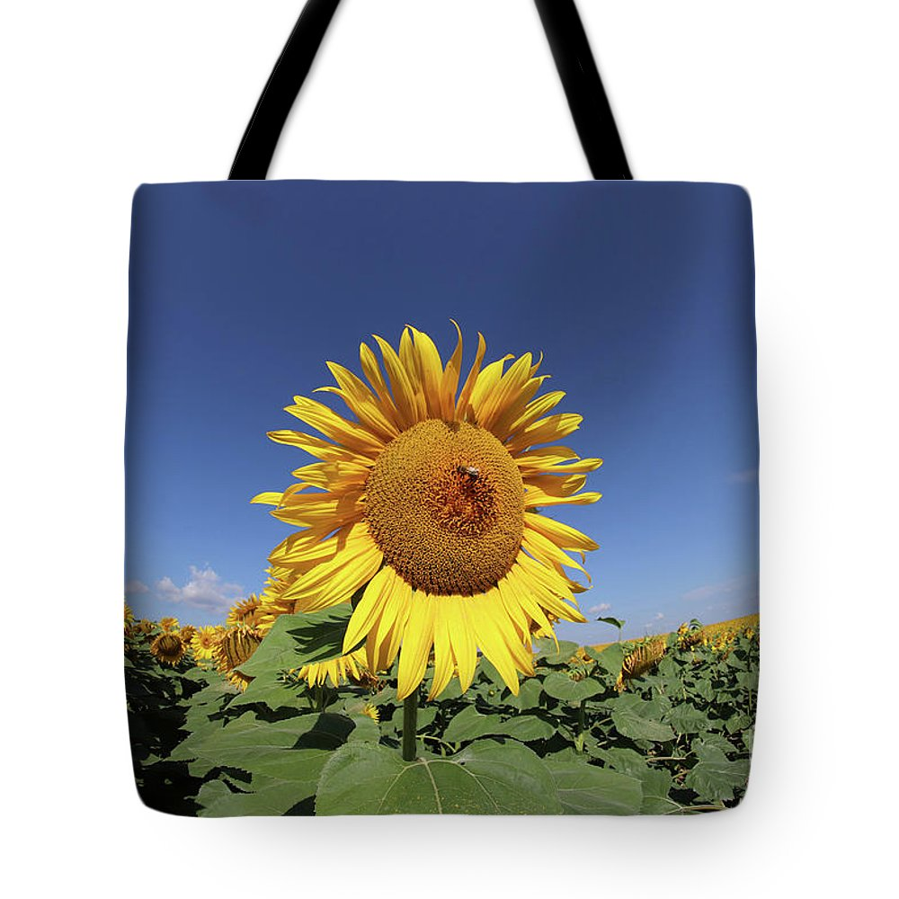 Sunflower Tote Bag featuring the photograph Bee On Blooming Sunflower by Michal Boubin