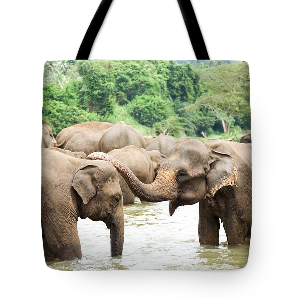 Animals In The Wild Tote Bag featuring the photograph Elephants In River by Lp7