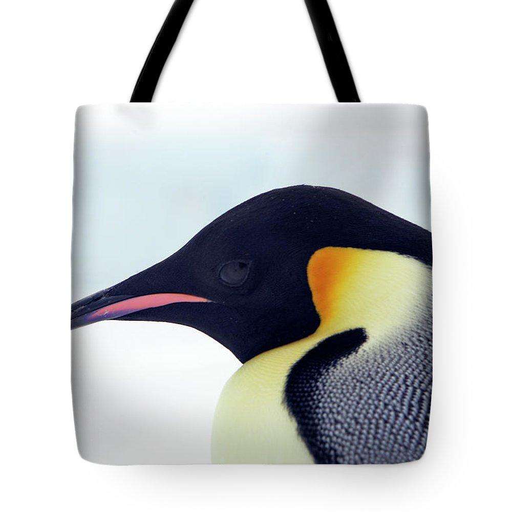 Emperor Penguin Tote Bag featuring the photograph Emperor Penguin by Sylvain Cordier