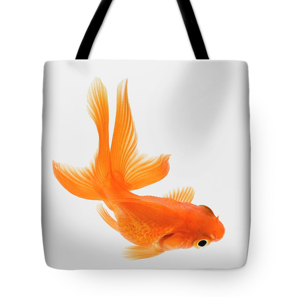 Pets Tote Bag featuring the photograph Fantail Goldfish Carassius Auratus by Don Farrall