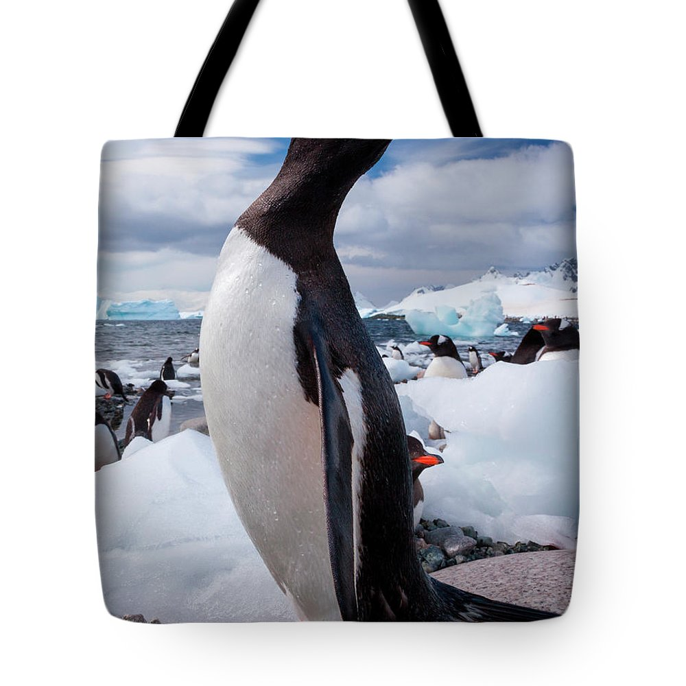 Vertebrate Tote Bag featuring the photograph Gentoo Penguins, Antarctica by Mint Images/ Art Wolfe