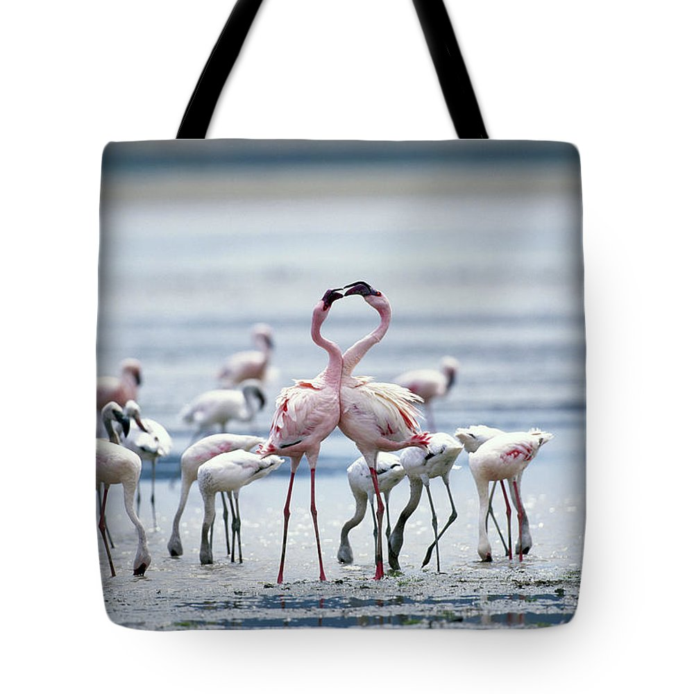 Tanzania Tote Bag featuring the photograph Lesser Flamingoes Phoeniconaias Minor by Paul Souders