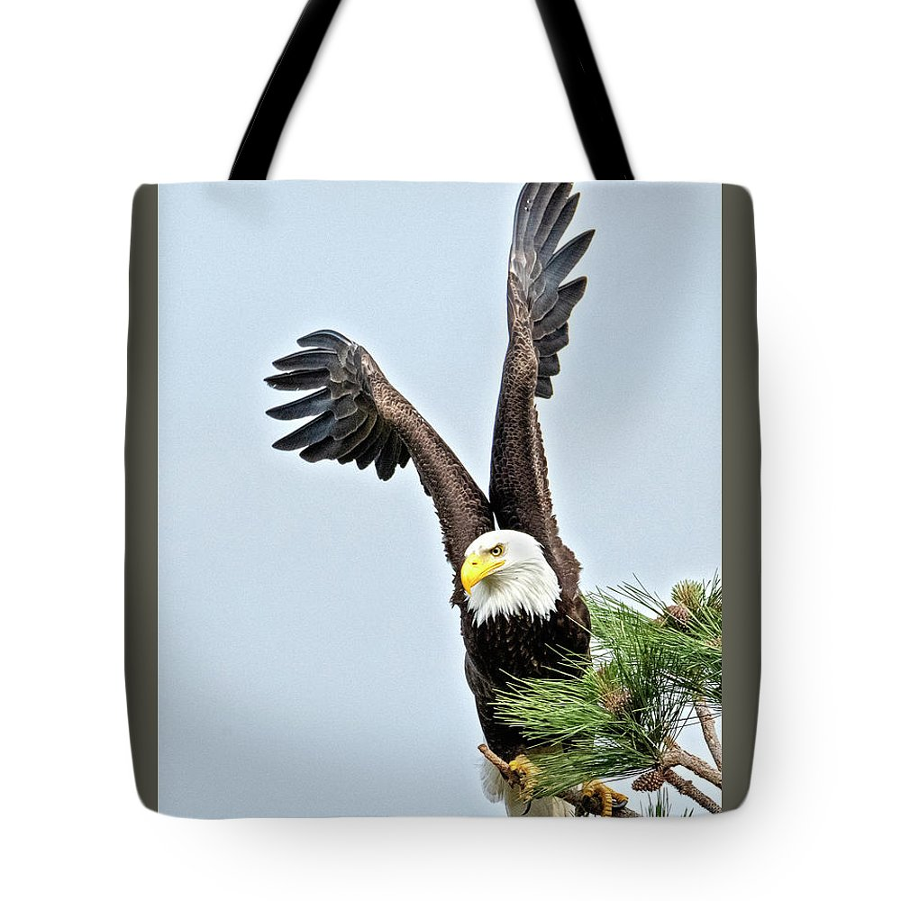 Eagle Tote Bag featuring the photograph Lifted Wings by Mike Dawson