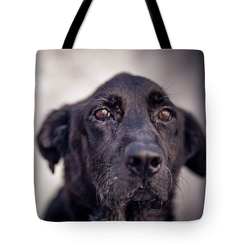Dog Tote Bag featuring the photograph Ozzy by Sara Ricci