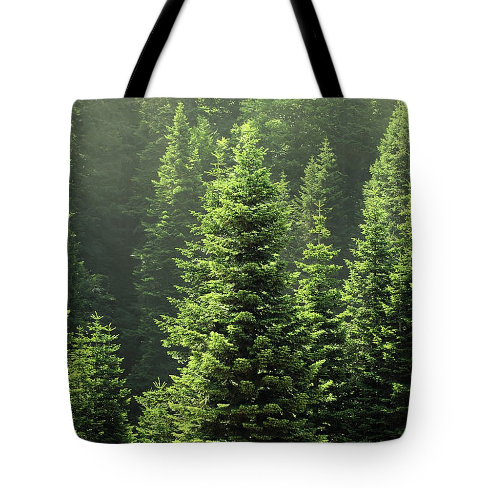 Scenics Tote Bag featuring the photograph Pine Tree by Petekarici