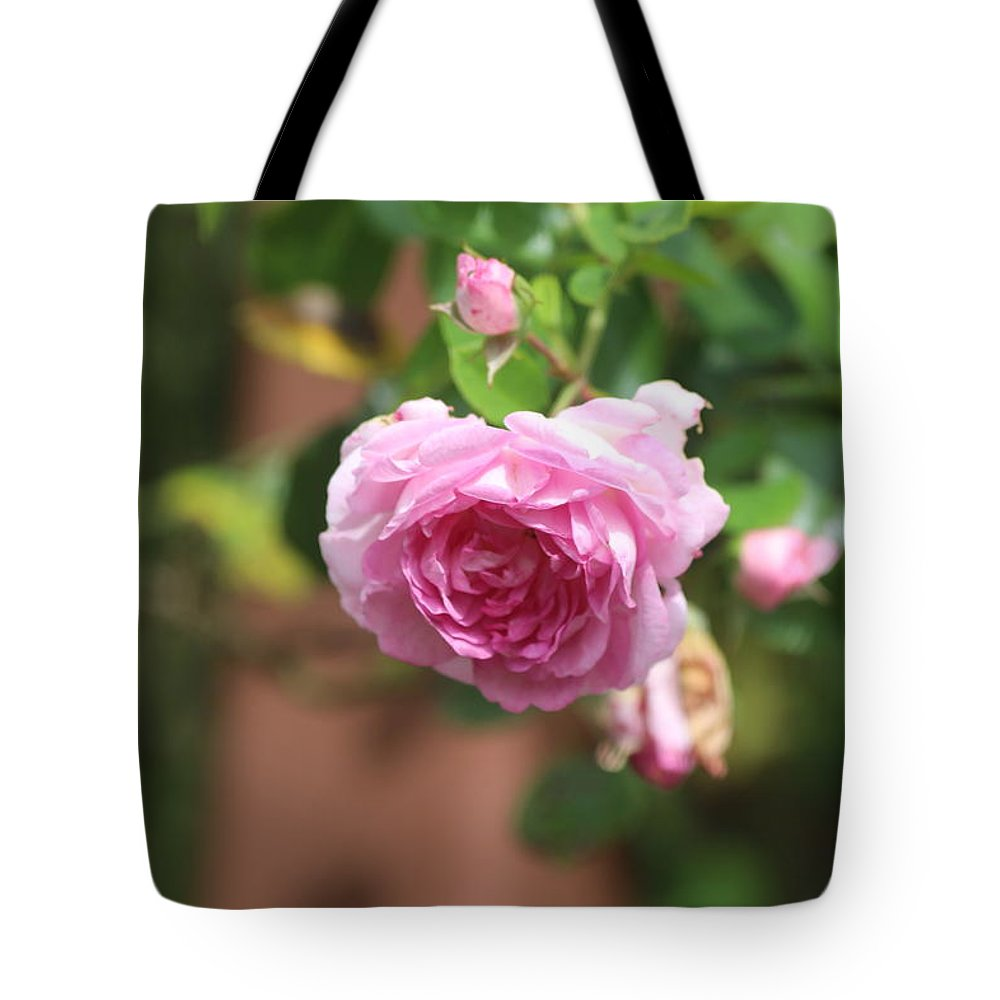 Pink Rose Fragile Bud State College Pennsylvania Beautiful Flower Tote Bag featuring the photograph Pink Rose by Scott Burd