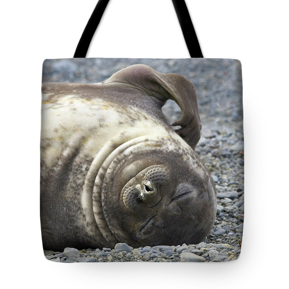 South Georgia Island Tote Bag featuring the photograph Southern Elephant Seal Weaner Pup by Eastcott Momatiuk