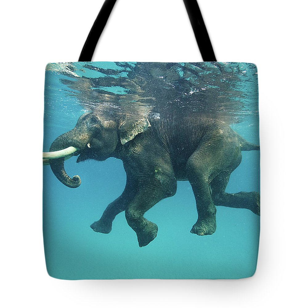 Underwater Tote Bag featuring the photograph Swimming Elephant by Mike Korostelev Www.mkorostelev.com